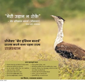 Not that Great being a Great IndianBustard