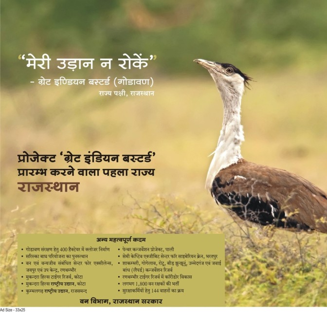 Not that Great being a Great Indian Bustard