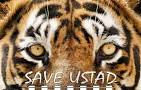 Ustad: The Tiger. What a Maneater means to India