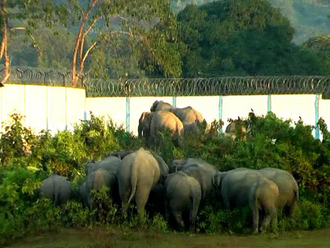 Why is a golf course killing elephants in Assam? Here's Why