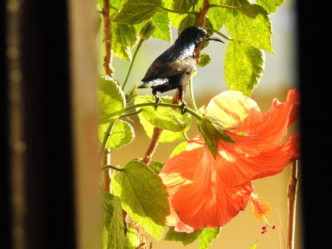 Sunbird Series