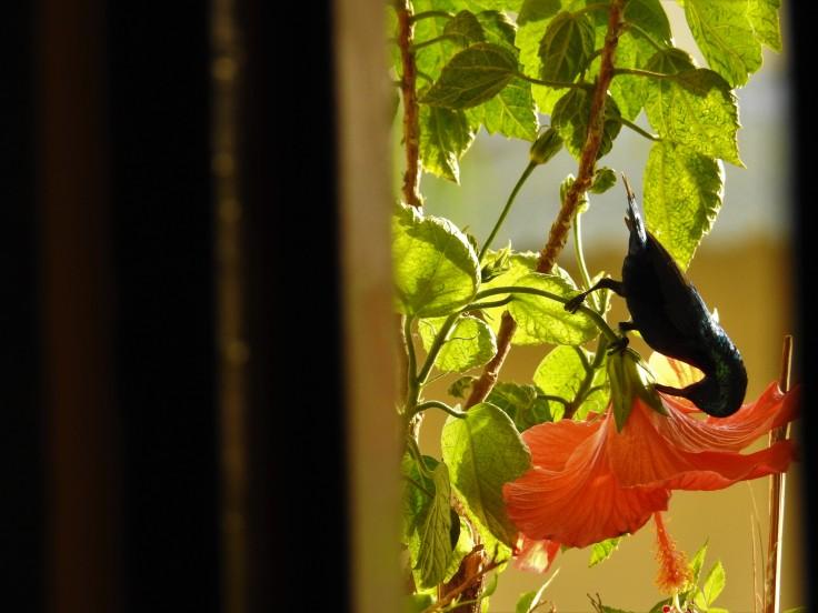 Sunbird M Crop 2.jpg