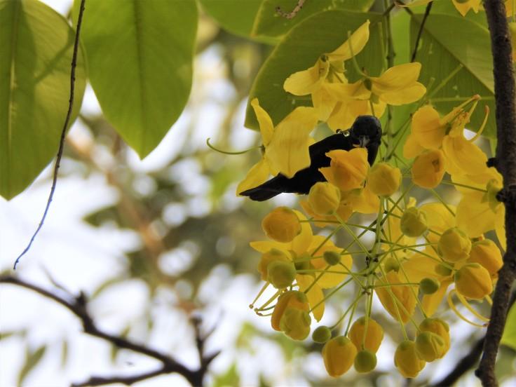 sunbird nectar