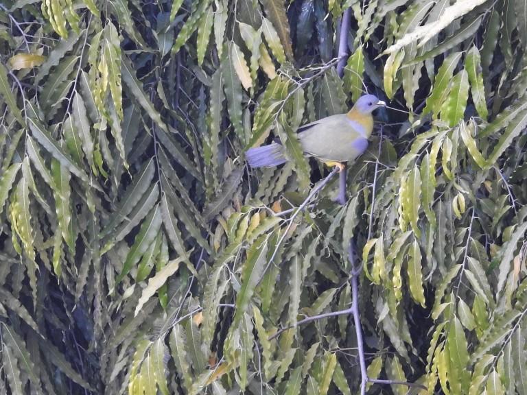 YFGP Nesting (3)