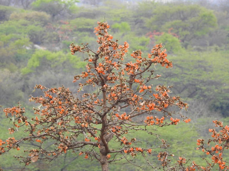 Palash Tree Single